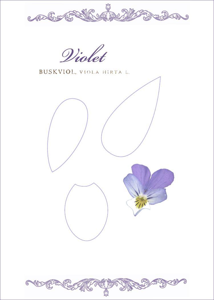 Violet Flower Template Crafts Pinterest Violets Template And
