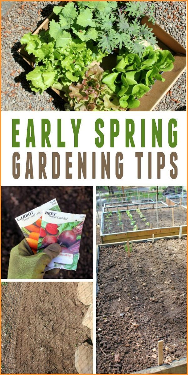 Superieur Early Spring Gardening Tips    Everything You Need To Know To Get An Early  Start