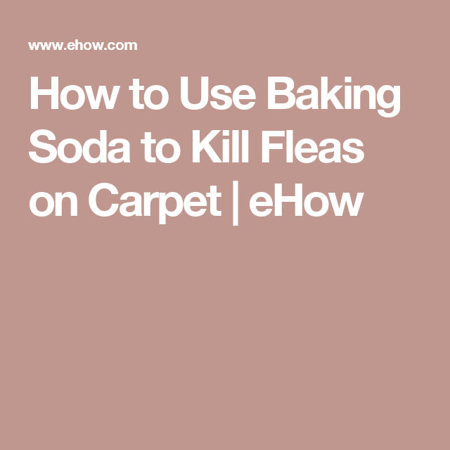 How To Use Baking Soda To Kill Fleas On Carpet Cleaning