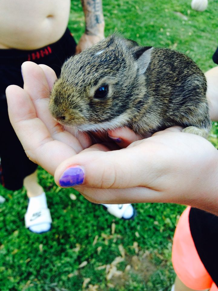My neighbors found baby bunnies in their yard so we got to ...