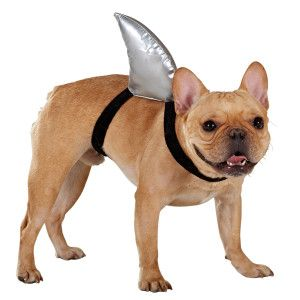 Top Paw Shark Fin Costume Costumes Petsmart Dog Clothes Dog Costume Dogs