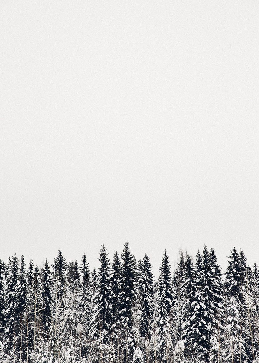 Photo Journal Winter In Swedish Lapland Winter Wallpaper Tree