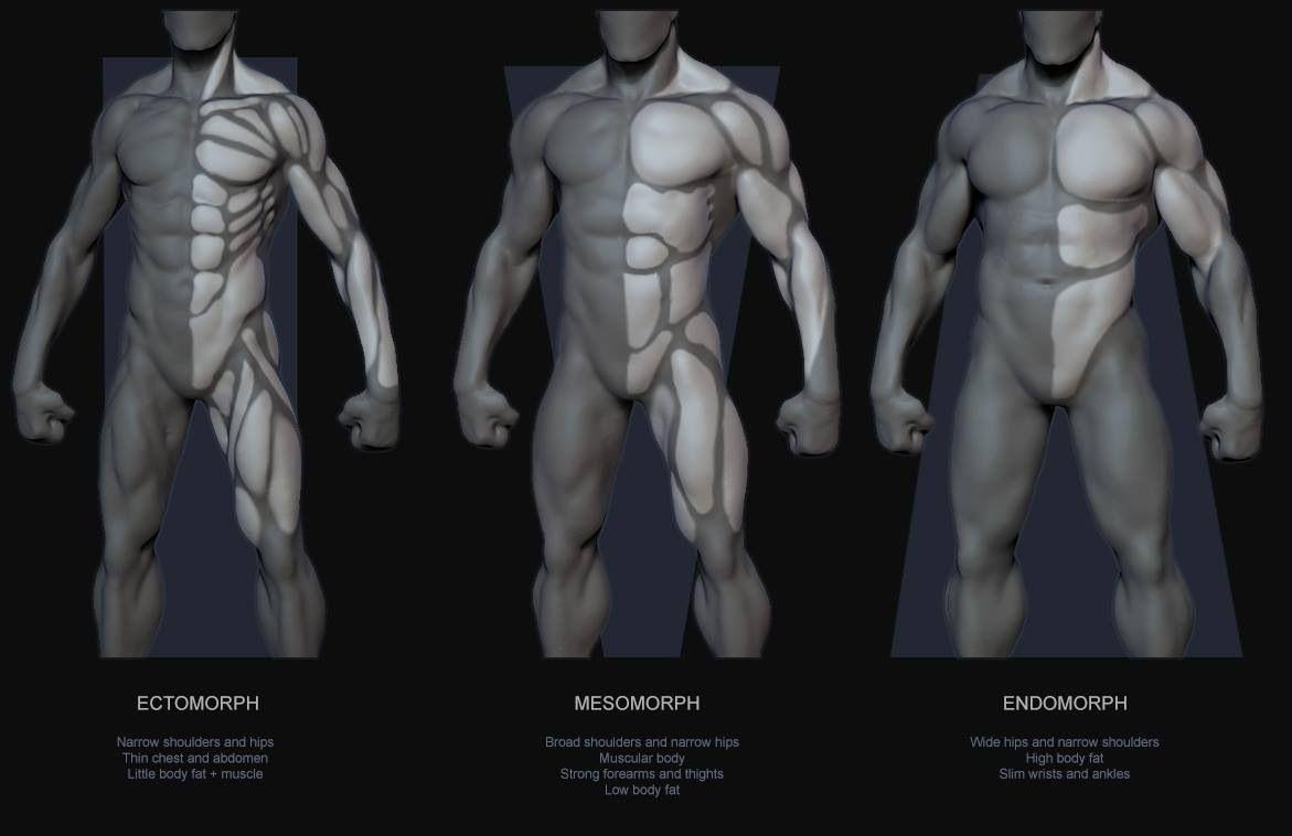 tipos de anatomia.rafael grasseti | anatomy 4 sculptors, Muscles