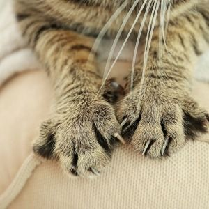 How To Get Cat Pee Smell Out Of Couch Cat Pee Smell Pee