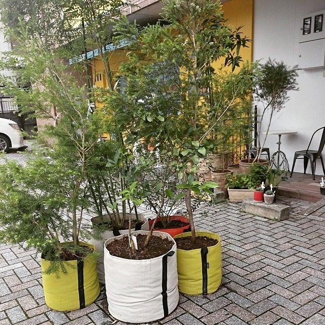 Petite oasis végétale créée dans une cour avec des pots de fleurs ...