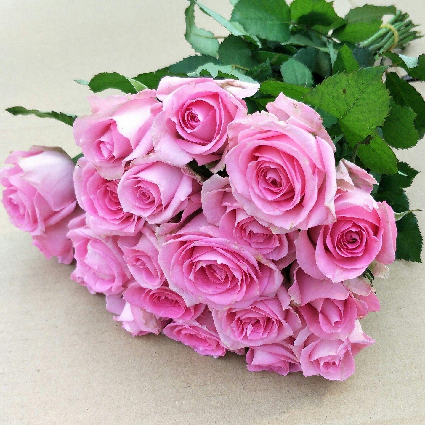 Pink roses rosesflower happy birthday pinterest flowers pink roses rosesflower izmirmasajfo