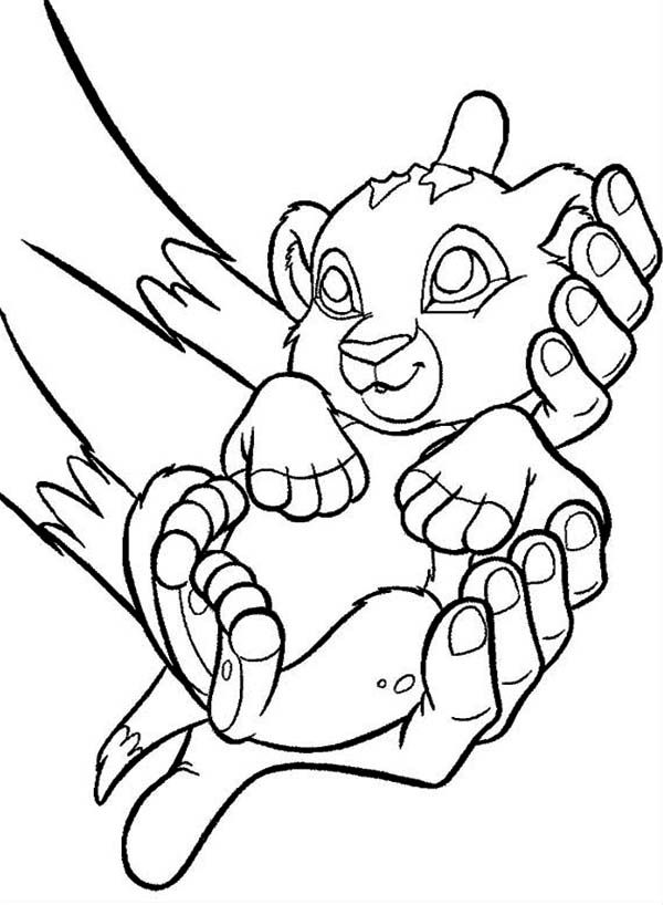 Cute Baby Simba The Lion King Coloring Page Cartoon Coloring