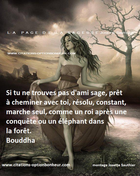 Connu La Page de la Sagesse : Citation de Bouddha sur le chemin de la  YL79