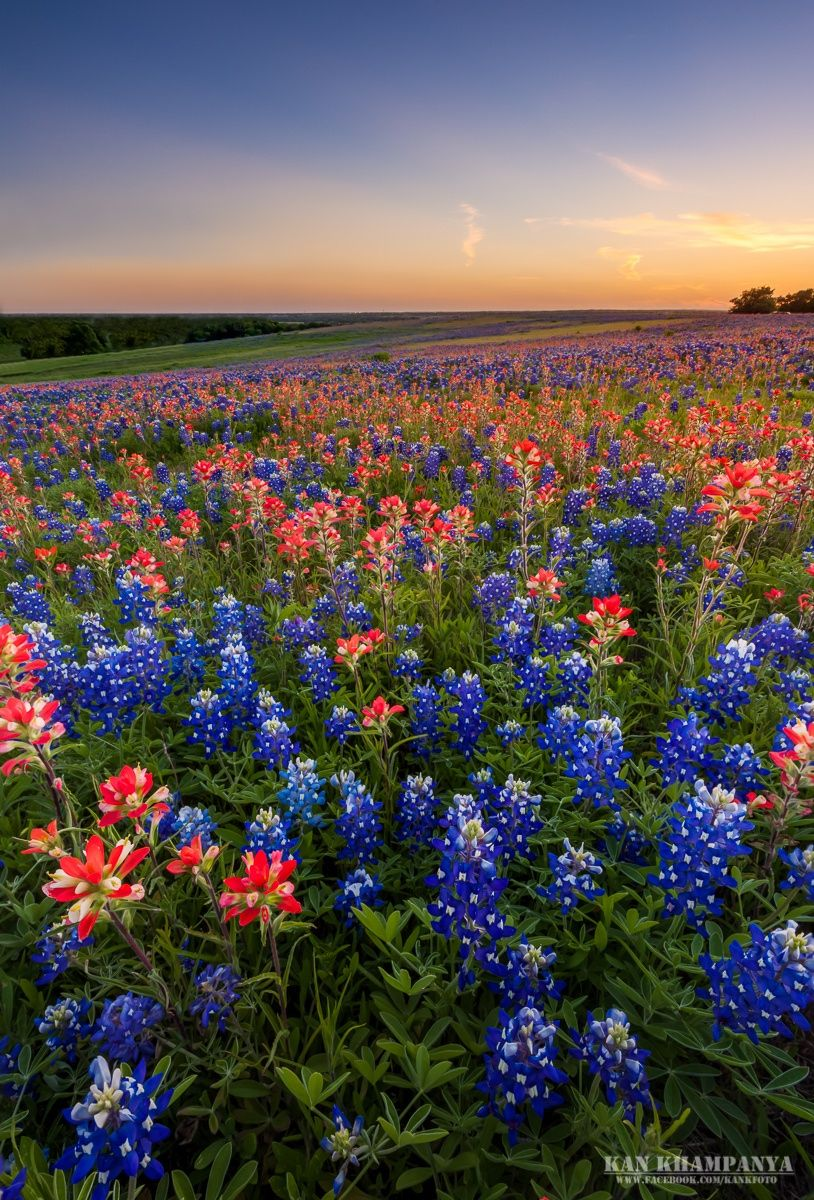 Colorful Texas Spring By Kan Khampanya On 500px Texas Wild