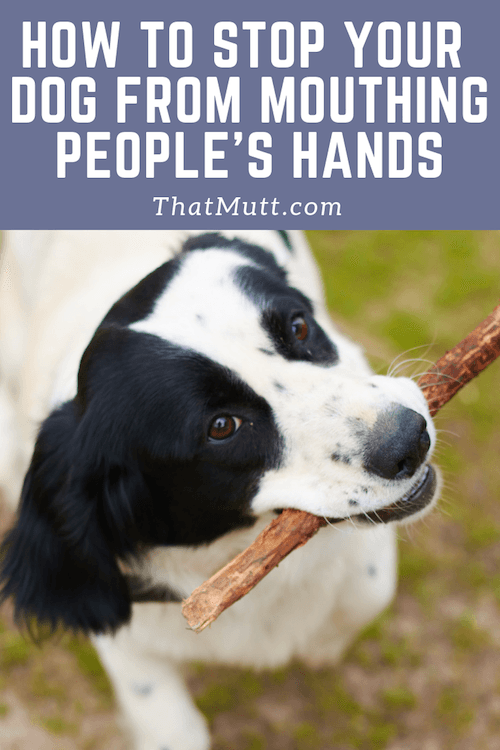 How to Stop Adult Dog From Play Biting Hands Stop Dog's