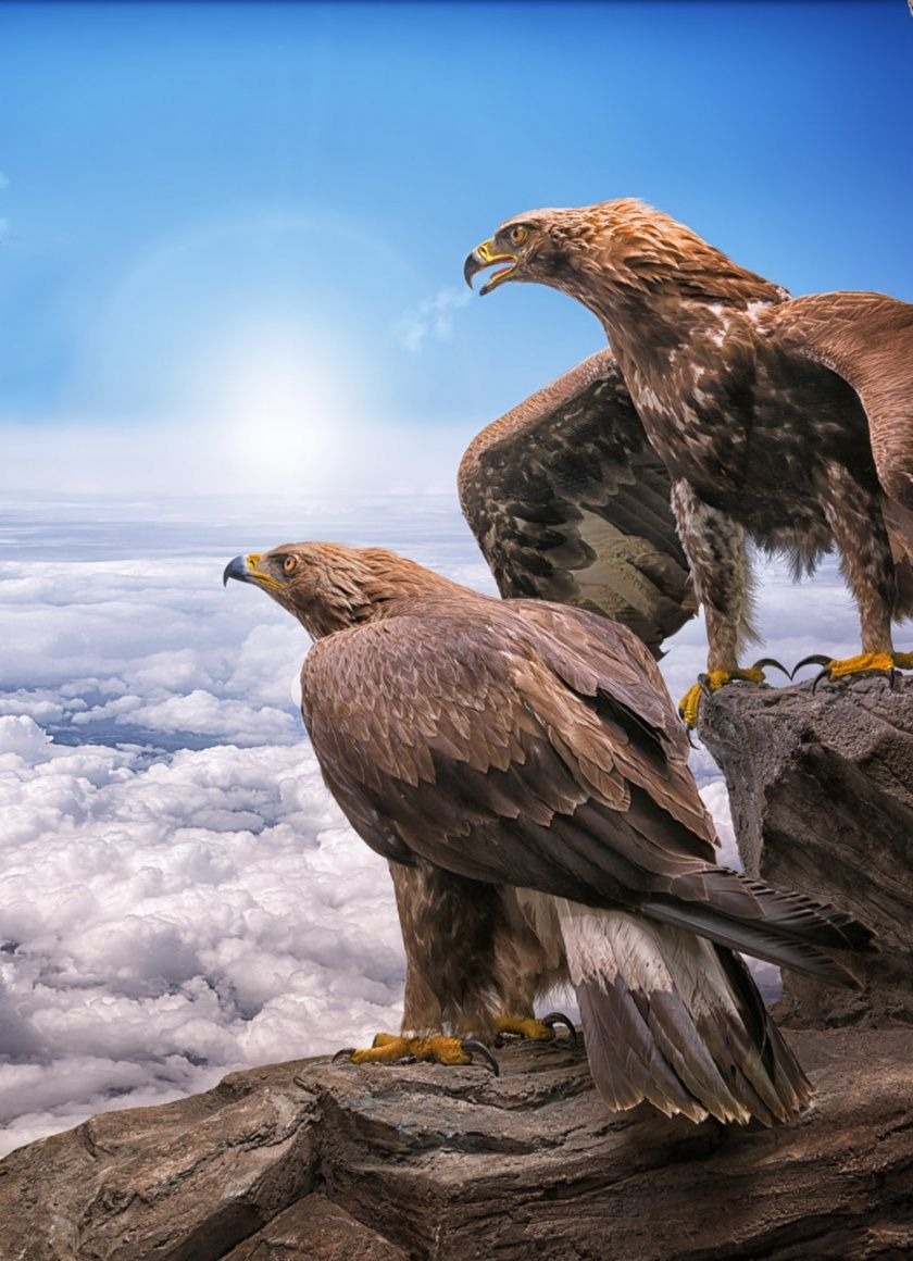 Eagle Wallpaper 4k Iphone Mywallpapers Site Eagle Wallpaper Animal Wallpaper Animals