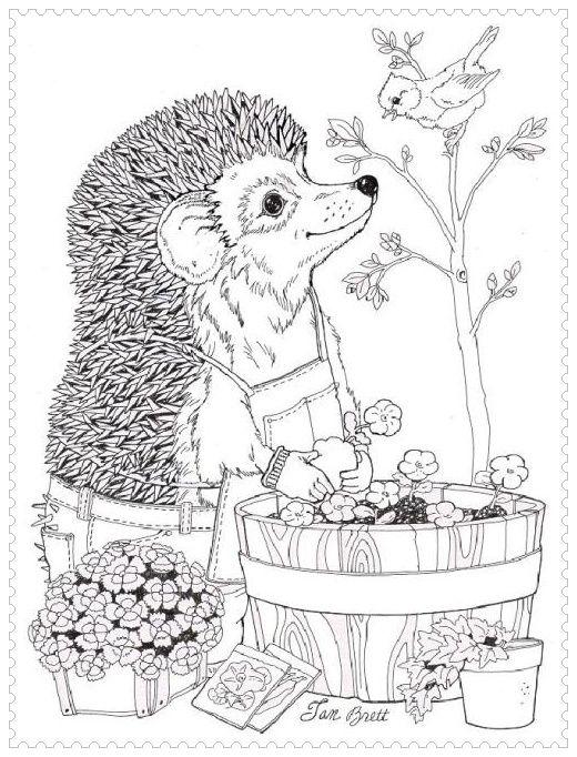 Hedgehog Coloring Google Search Spring Coloring Pages Earth Day Coloring Pages Animal Coloring Pages