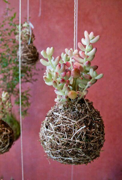 kokedama plantes grasses suspendre dans un arbre mort jardin pinterest plantes grasses. Black Bedroom Furniture Sets. Home Design Ideas