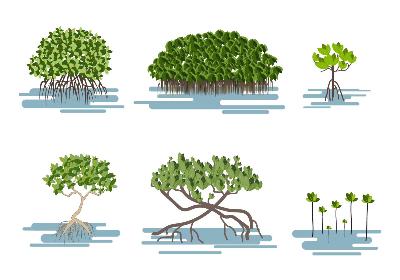 free-mangrove-vector.png (1400×980) | Manglar | Pinterest