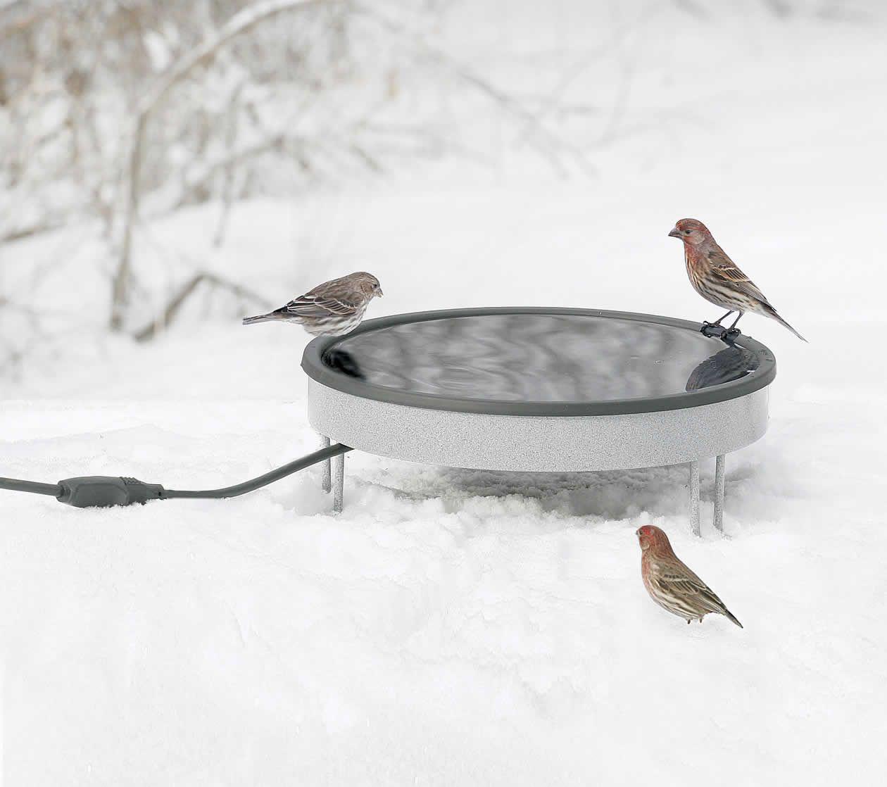 Heated ground bath sold out heated bird bath bird bath