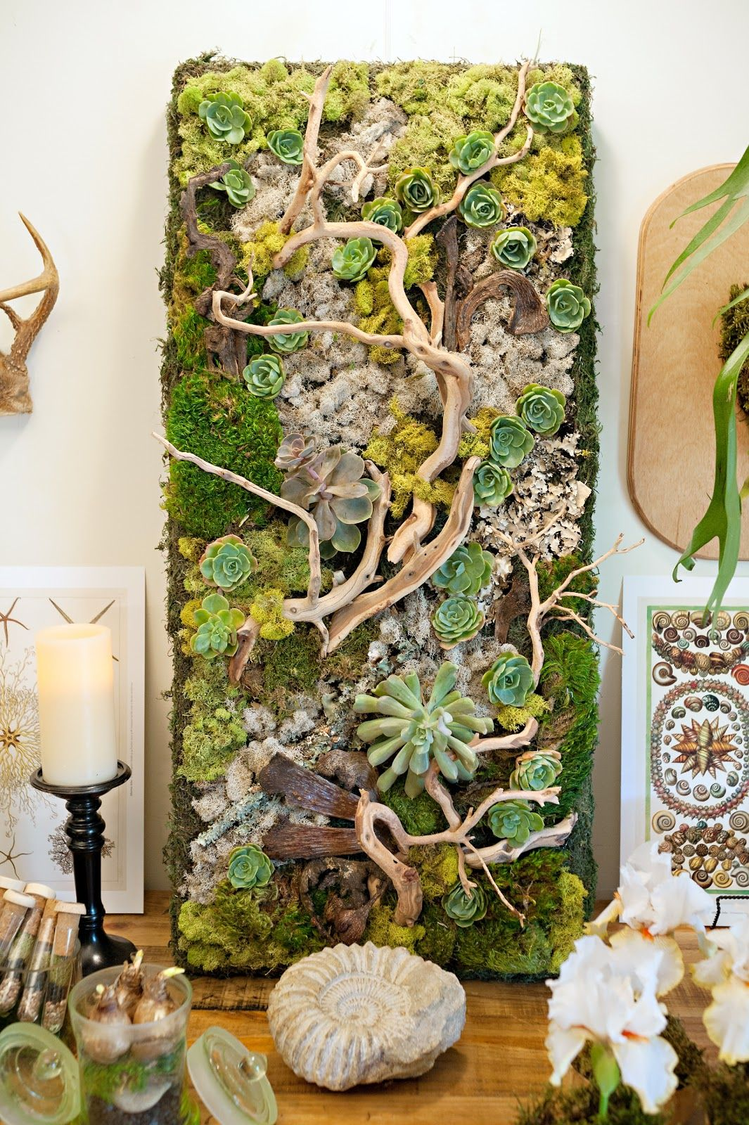 Lovely Embellished+Wall+Panel+Showcases+Succulents+and+Driftwood