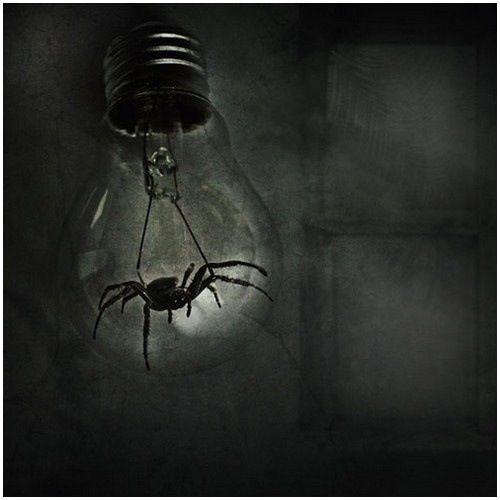 Spider lightbulb