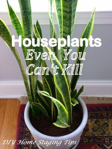 the best easy care indoor plants for homestaging gardening that i love easy care indoor. Black Bedroom Furniture Sets. Home Design Ideas