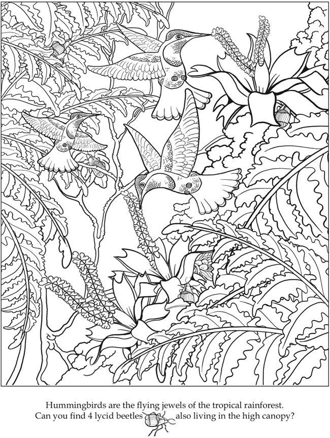 Ausmalbild Kolibri Zum Ausdrucken Ausmalen Ausmalbilder Und