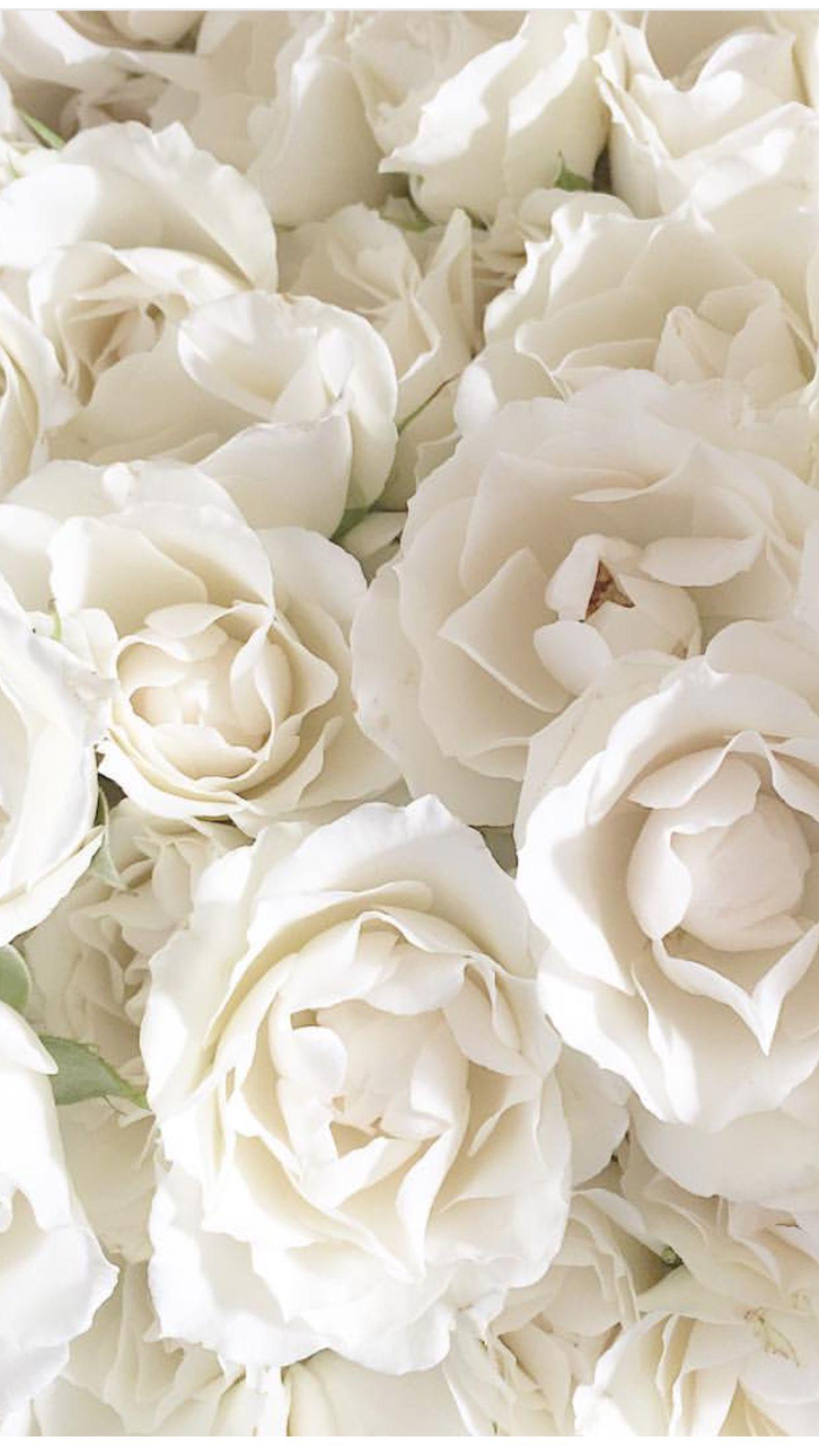 White Flower Aesthetic Background