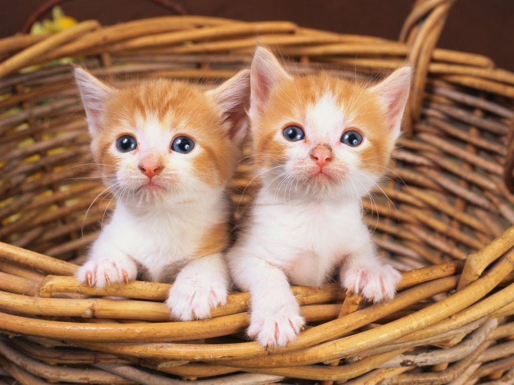 Best cute kittens meowing and playing video pilation Cute