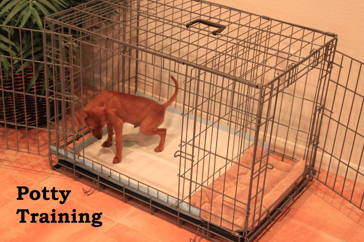 how to potty train a puppy fast and free