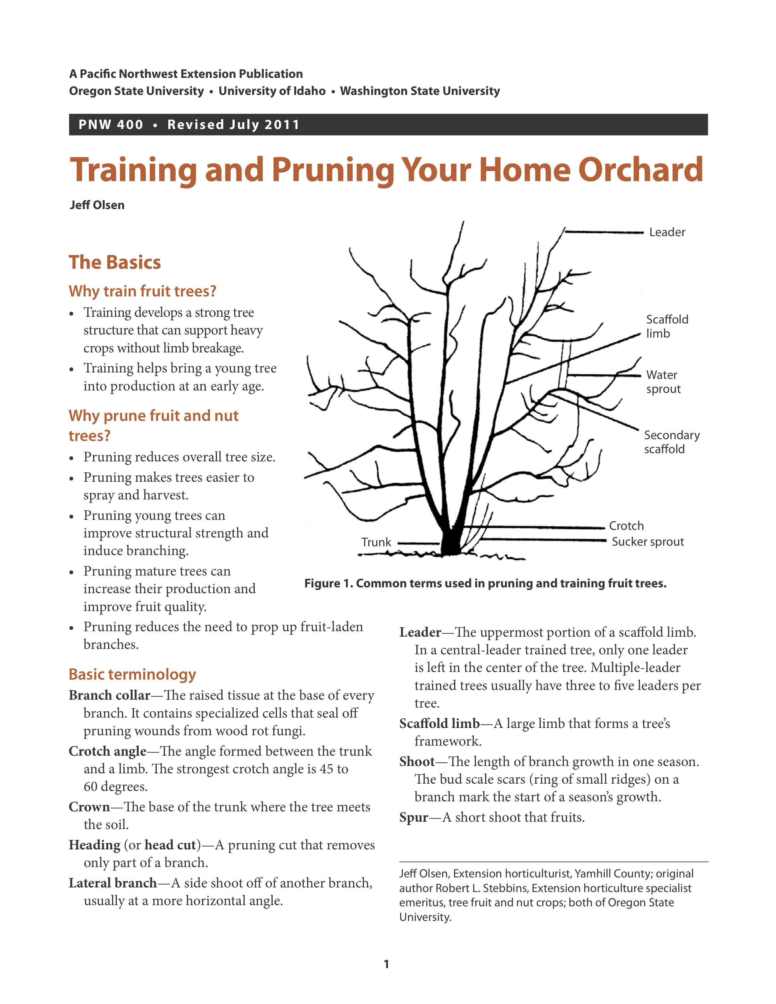 Training And Pruning Your Home Orchard Pruning Plum Trees Prune