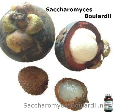Saccharomyces boulardii on probioottihiiva, joka auttaa kun suolistofloora on sekaisin. #terveyshiiva #maitohappo #probiootti