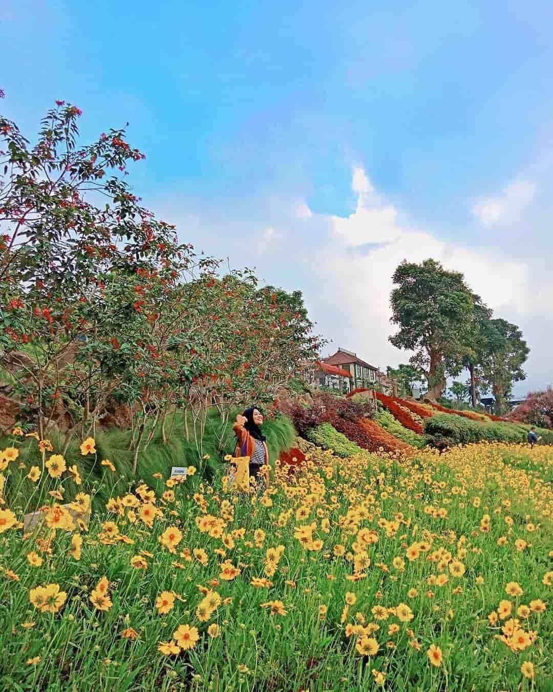 Rainbow Garden Taman Bunga Warna Warni Ala Pelangi Di Lembang Taman Bunga Taman Bunga