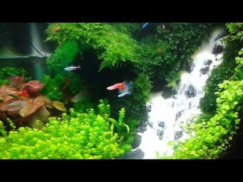 Nice Most Beautiful Aquascapes (Underwater Landscapes)   YouTube