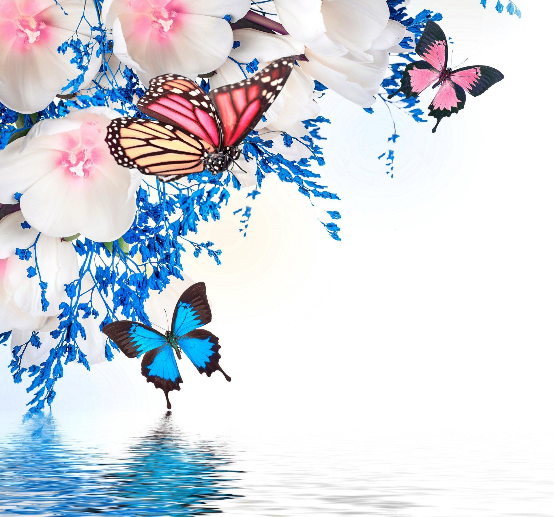Butterfly on a tulip Wallpapers HD Wallpapers | Фрески ...