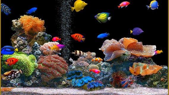 Afficher L Image D Origine Aquarium Anime Fond Ecran