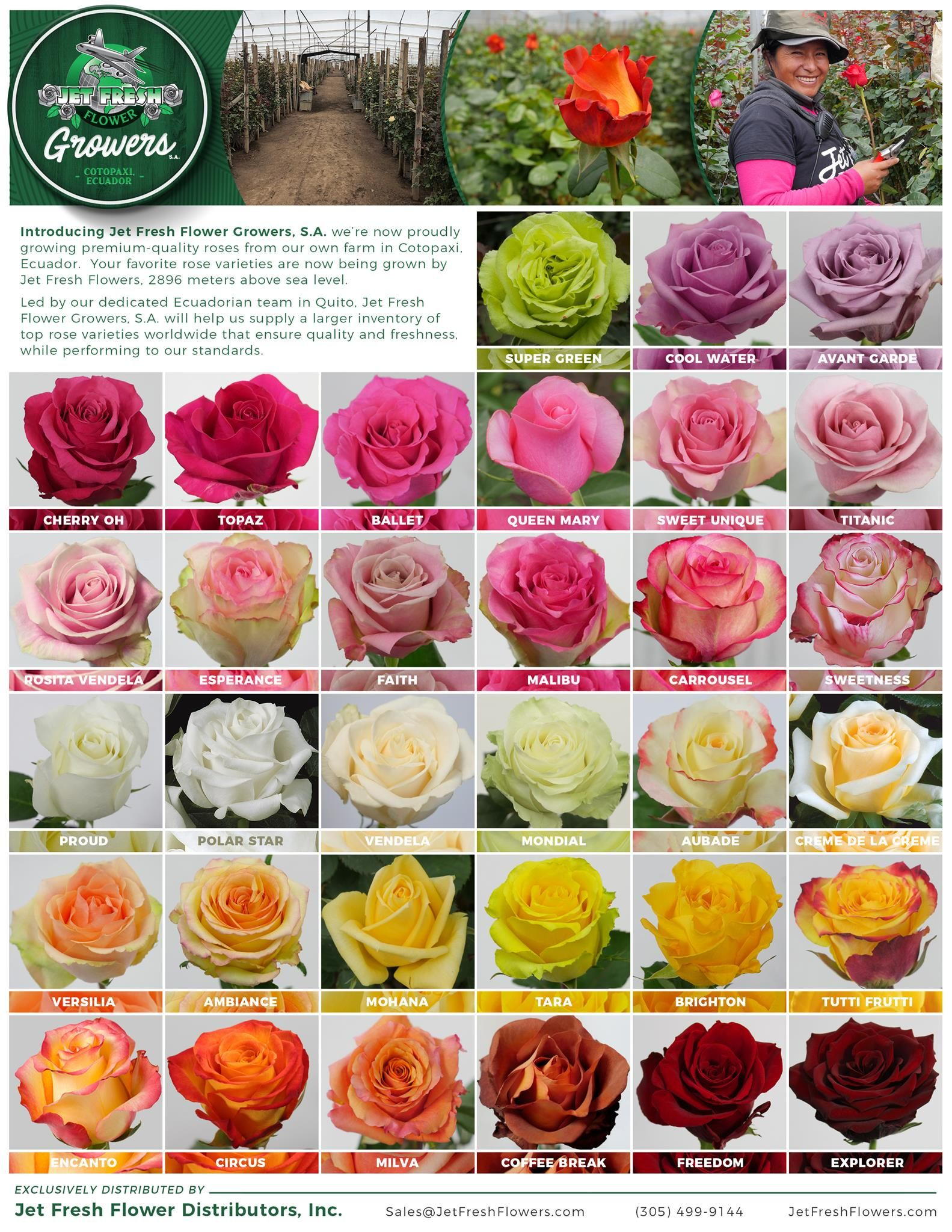 Jetfreshflowers Com Jet Fresh Flower Growers S A Rose Variety Sheet Rose Varieties Beautiful Rose Flowers Types Of Flowers