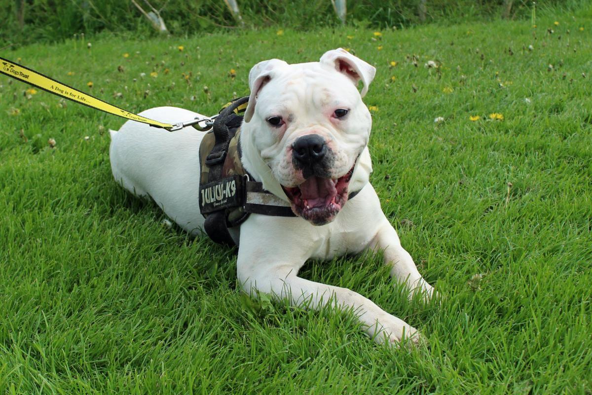 Twitter Search Adopt Dog Dog Adoption Senior Dog Shelter Dogs