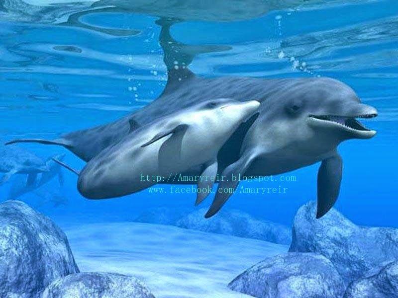 imagenes de delfines aqui | Imagenes | Pinterest