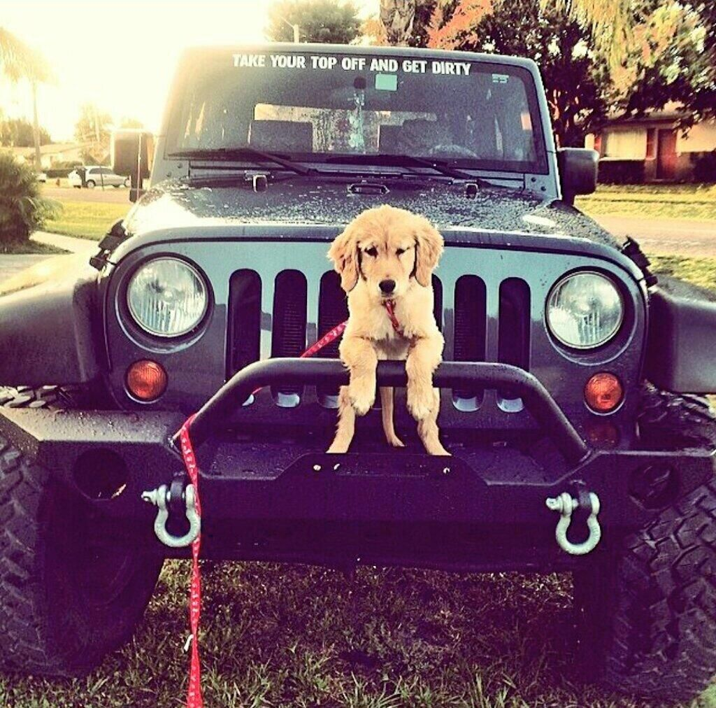 Jeepindogs On Jeep Dogs Cute Baby Animals Cute Dogs