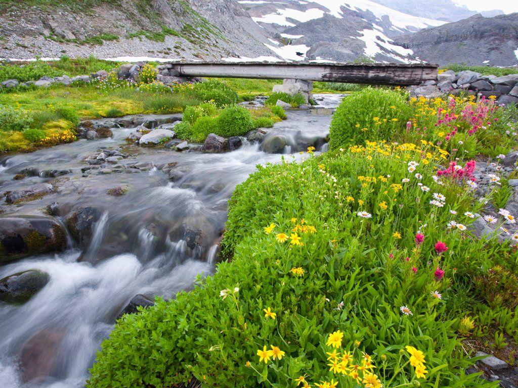 Creekside Wildflowers Mt Rainier Np Washington Webshots