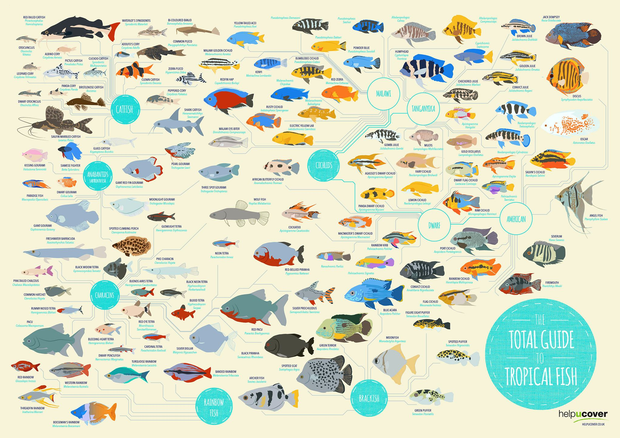 Tropical Fish List Of Species