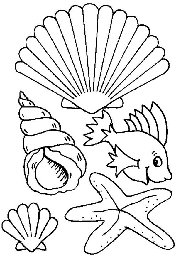 Different Types Of Sea Creature And Seashell Coloring Page Download Print Online Coloring Pages F Ocean Coloring Pages Online Coloring Pages Coloring Pages