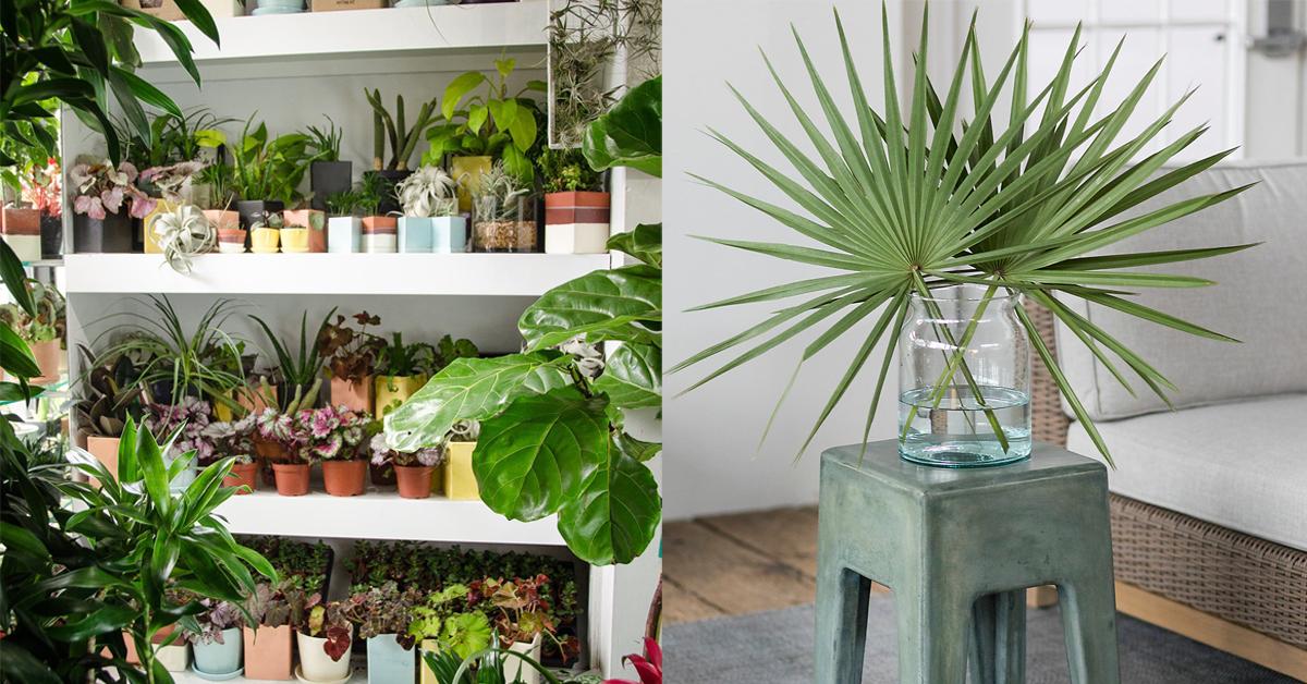 17 Of The Best Places To Buy Houseplants Online Indoor Plants