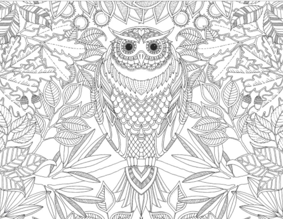 Here Is Your Chance To Print And Color Some Sample Pages From Of The Worlds Best Selling Adult Coloring Books Such As Secret Garden Flower Designs