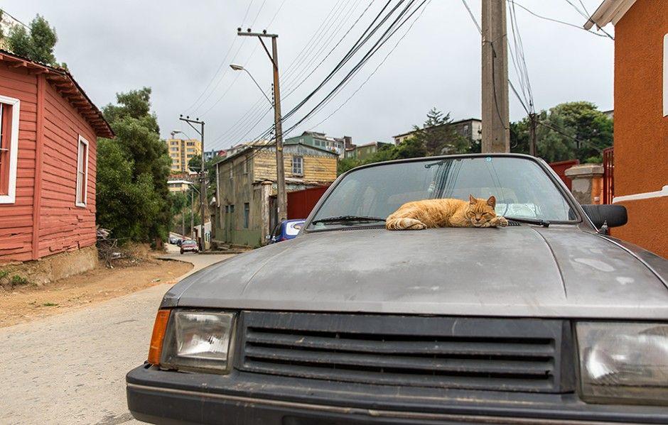 El descanso - Valparaíso - Región de Valparaíso - Chile - Christian Navarrete.