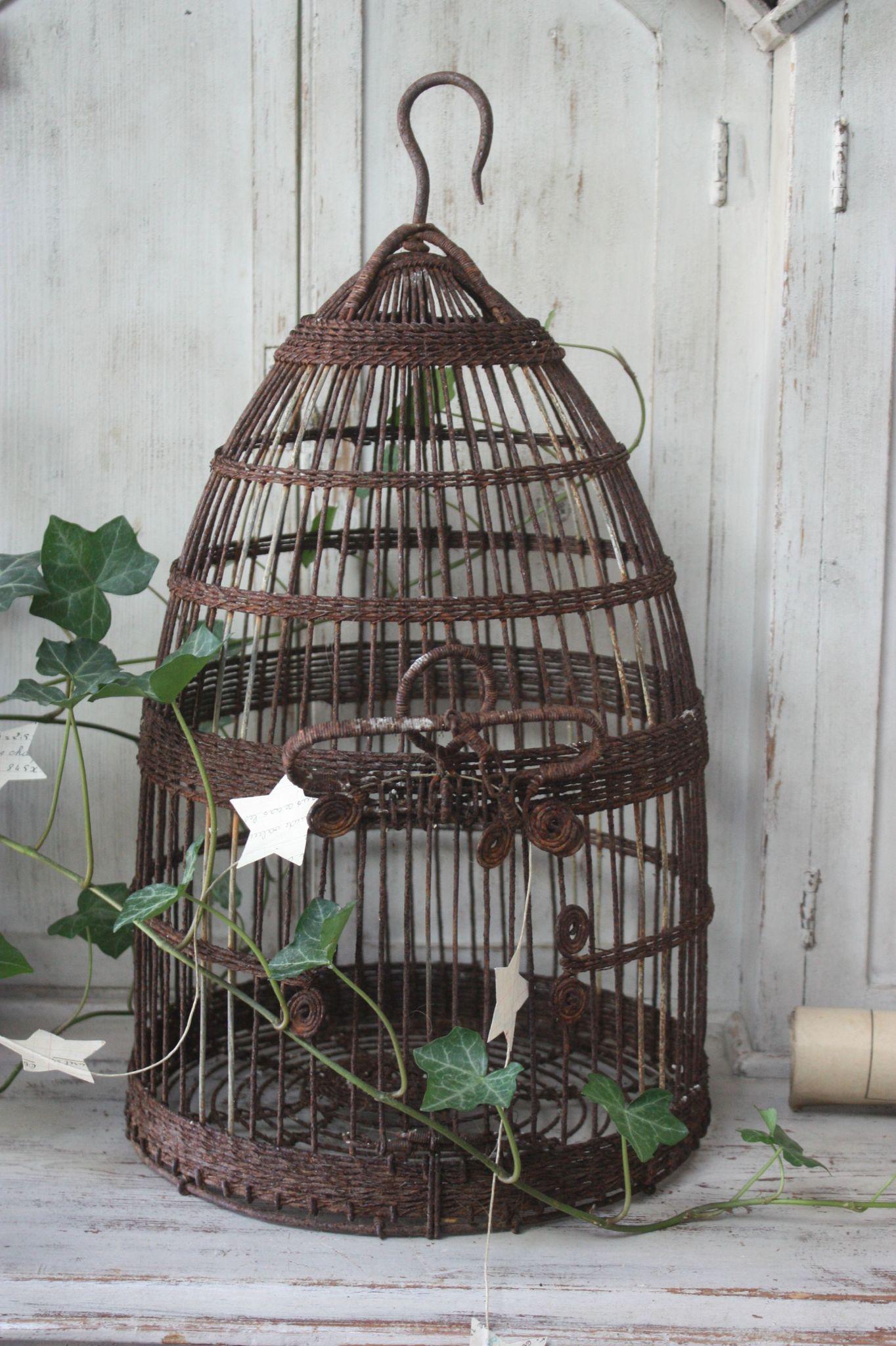 pingl par mp th venin sur cages oiseaux pinterest cage oiseaux cage deco et cage. Black Bedroom Furniture Sets. Home Design Ideas