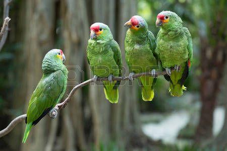 Loros Verdes Loro P Jaro Posado En La Percha Loros Pajaro Mascota Animal Domestico