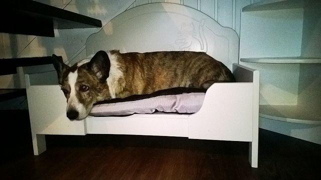 Koiran sänky tuunattu lasten sängystä | Flickr - Photo Sharing!