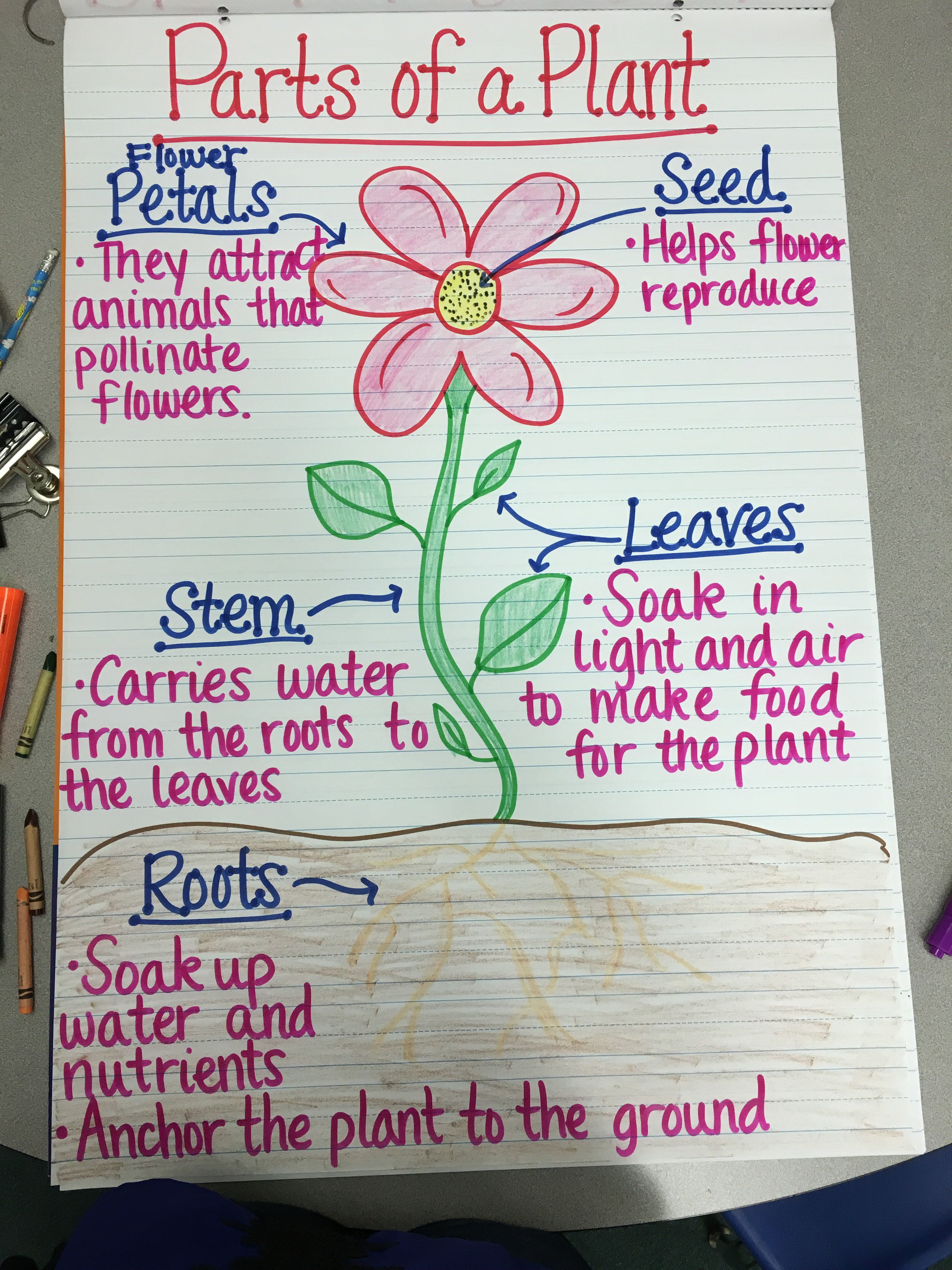 Image result for parts of a plant first grade anchor chart