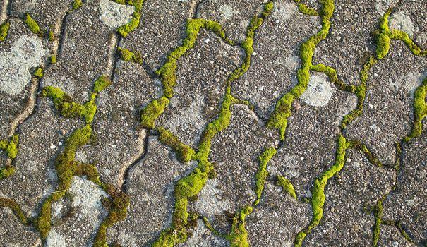 Eliminer La Mousse Sur Une Terrasse Nettoyer Terrasse Nettoyage Terrasse Desherbant Naturel