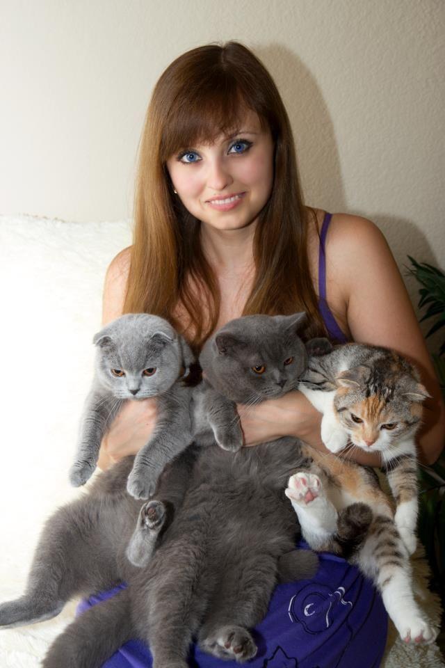 Scottish Fold Kittens For Adoption Cute Cats Pictures Scottish Fold Cat Scottish Fold British Shorthair Kittens