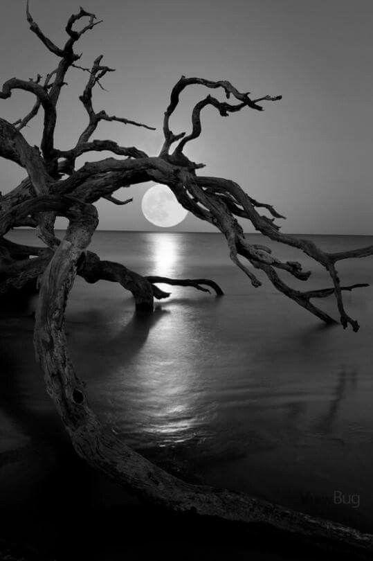 Bonita Luna En Blanco Y Negro Moon In 2019 Nature Moon