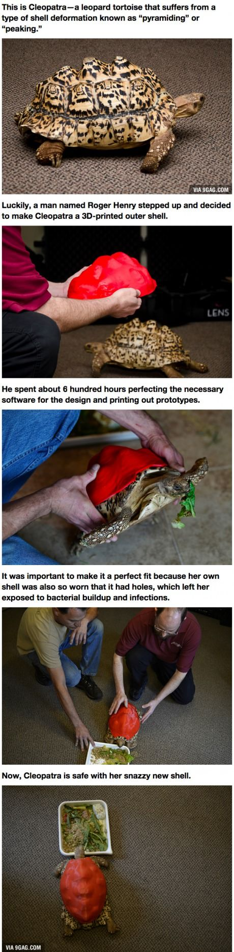 DPrinted Shell Helps Tortoise Gets A Second Chance At Life - Tortoise gets 3d printed shell